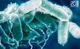 La greffe fécale, un espoir pour les patients souffrant de la maladie de Crohn.