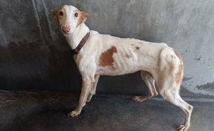 La SPA du Rhône a récupéré 53 chiens, maltraités et enfermés dans une maison avec leur maîtresse.