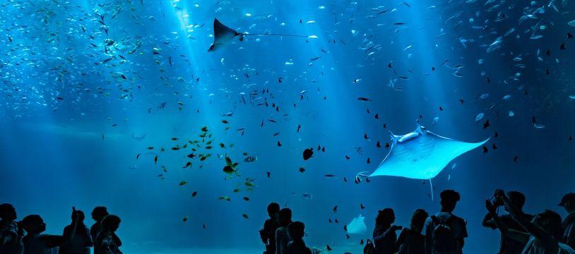 Nausicaa est le plus grand aquarium d'Europe.