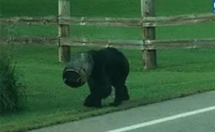 Capture d'écran du «bucket bear».