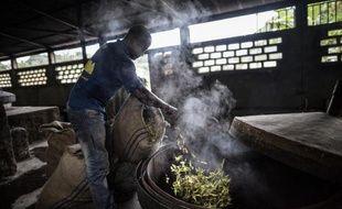 Un ouvrier jette les fleurs d'ylang-ylang dans un alambic pour obtenir, par distillation, l'huile essentielle qui entre dans la composition de parfums, comme le Chanel n°5 notamment, le 24 février 2015 à Moroni, aux Comores