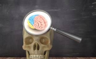 Une activité électrique perdure dans le cerveau dans les 10 minutes qui suivent l'arrêt cardiaque (illustration).