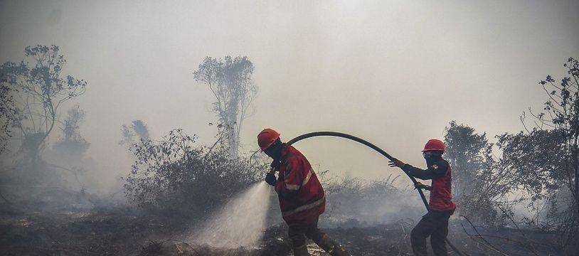 Chaque année, des incendies volontaires en Indonésie créent une brume de fumée qui peut finir par recouvrir toute la région de l'Asie du Sud-Est.