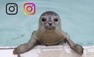 Le compte Instagram de «20 Minutes» en fête !