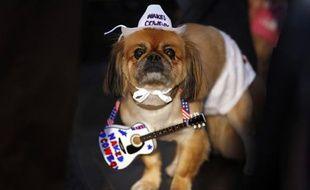 Georgie le pékinois participe au au carnaval des chiens de Times Square, en octobre 2009.