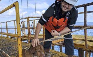 Le chien Boonrod a été secouru par un employé d'une plateforme pétrolière située au large des côtes thaïlandaises.