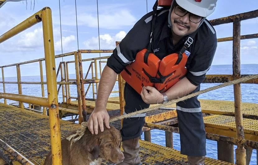 Thaïlande: Un chien secouru en pleine mer à 220 km des côtes