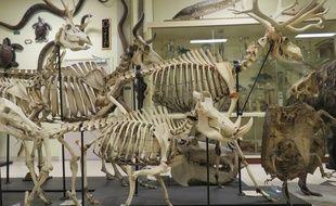 Les collections zoologiques de l'université Rennes 1 abritent environ 150.000 animaux.