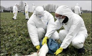 Le virus H5N1 de la grippe aviaire sur des oiseaux sauvages s'est étendu vendredi en Allemagne, atteignant l'Etat régional du Schleswig-Holstein (nord-ouest), et le sud du pays, près du lac de Constance, ont annoncé les autorités.