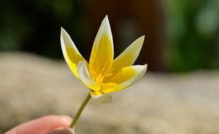 Avec le retour des beaux jours, les fleurs éclosent.