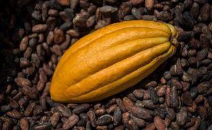 Les chocolatiers français s'inquiètent de la flambée des cours de cacao, dans un contexte de récolte de fèves en baisse mais de demande mondiale toujours plus importante.