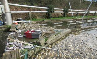 La pollution au lisier du ruisseau Quillimadec a tué plus de 40 tonnes de truites d'une pisciculture située en aval.