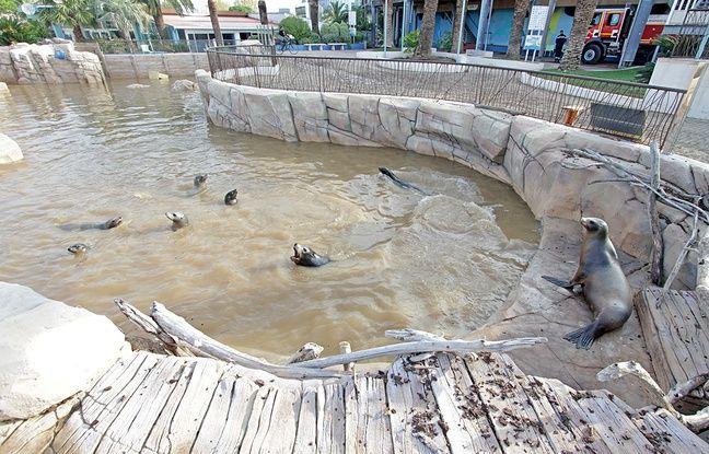 L'eau du bassin des otaries juste après le déluge