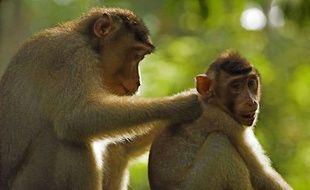Les macaques du parc animalier de Labenne vont être euthanasiés.