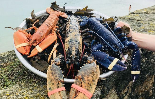 """Résultat de recherche d'images pour """"homard breton"""""""