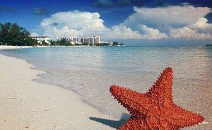 Une plage des Bahamas. Illustration.