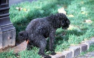 A Barking, au Nord-Est de Londres, un fichier répertoriant l'ADN de tous les chiens va être créé pour traquer les maîtres qui ne ramassent pas les crottes de leur animal.