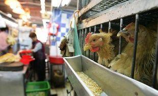 Un marché humide à Hong Kong où des poulets vivants sont abattus et préparés pour la consommation, 2 février 2006. (Photo illustration)