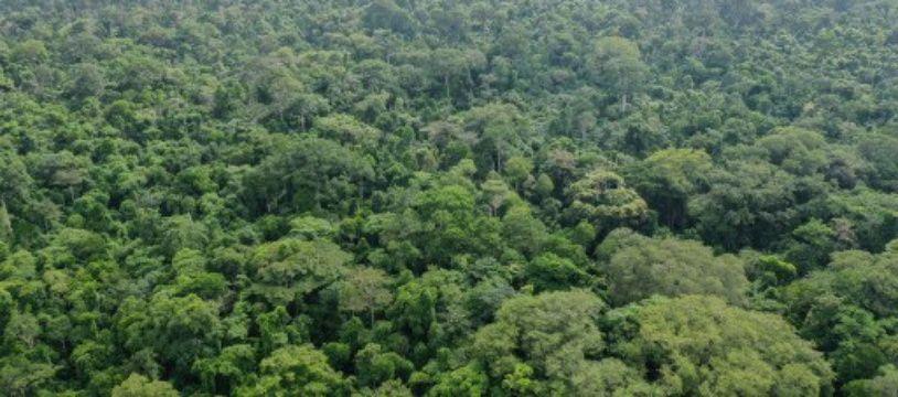 Vue aérienne de la forêt de la forêt Omo, au Nigeria.