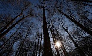 La forêt de Berce dans le département de la Sarthe.