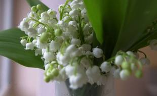 Illustration de muguet