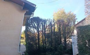 Une des haies, victime du pyromane présumé d'Orleix, dans les Hautes-Pyrénées.