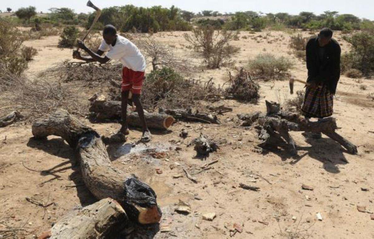 Hassan Hussein coupe quarante arbres par mois pour les transformer en charbon, parfaitement conscient des dommages qu'il cause à son environnement; mais c'est la dernière ressource qui reste à cet éleveur privé de bétail. – Simon Maina afp.com