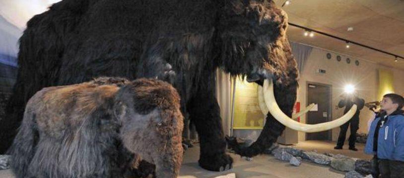 Un mammouth au musée Néanderthal de Mettmann, en Allemagne.