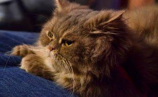 La chatte Diva dans «30 Millions d'amis» le 29 novembre 2011