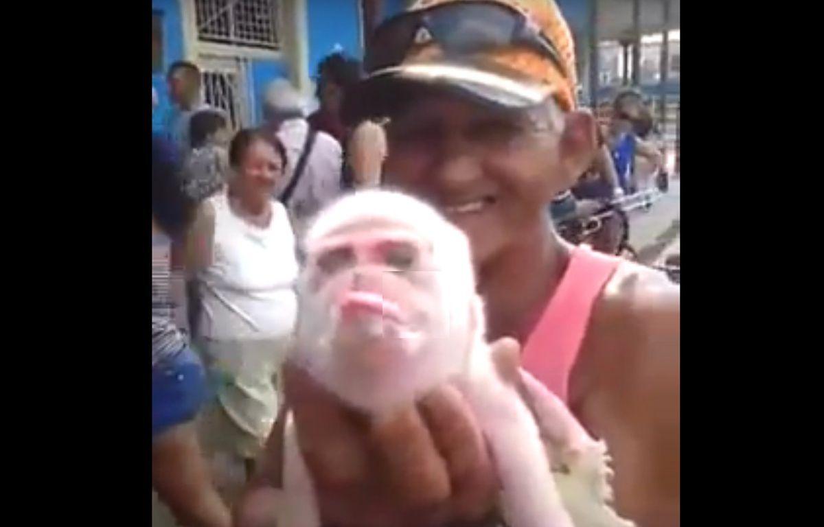 Un bébé cochon ressemblant étrangement à un singe à Cuba.  – YouTube