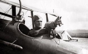 Un renard mascotte de l'armée de l'Air britannique lors de la Première Guerre mondiale.