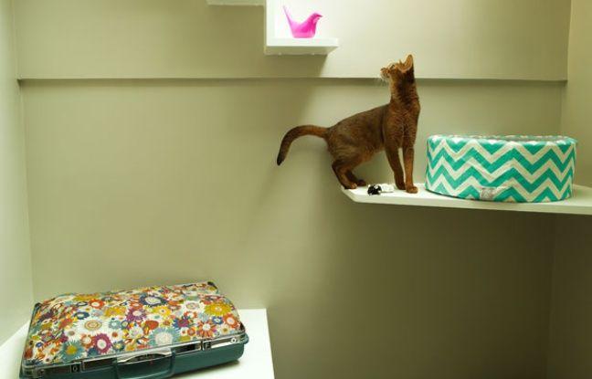 Un chat à l'hôtel Aristide, dans le 9e arrondissement de Paris.
