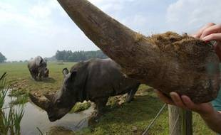 Un stock de cornes de rhinocéros estimé à un million de dollars a été brûlé dans un zoo américain.