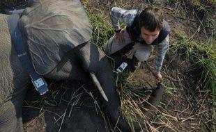 Un vétérinaire contrôle le  système de géolocalisation d'une éléphante sédatée le 3 février 2016 dans le Parc national de la Garamba en RDCongo