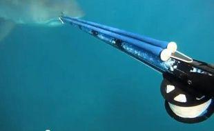 Un pêcheur sud-africain s'est retrouvé nez à nez avec un requin, en Afrique du Sud (vidéo mise en ligne le 30 juillet 2013).