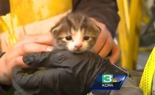 Ce chaton a été sauvé in extremis d'une mort certaine dans un compacteur à ordures.