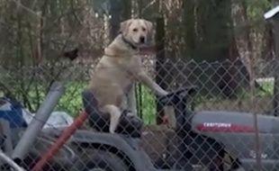 Les journalistes ont croisé un chien sur une tondeuse