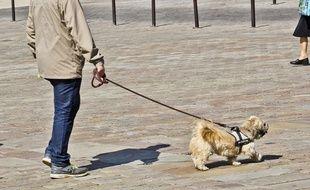Un chien tenu en laisse. (Illustration)