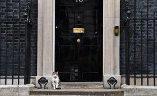 Larry, le chat du 10 Downing Street, devant la porte de la résidence du Premier ministre.
