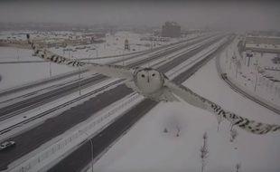 Une caméra de vidéosurveillance a capté des images d'une chouette harfang en plein vol.