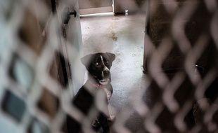 Un chien dans un refuge animalier à Montgeron, en 2017.
