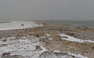 Google Maps permet désormais d'observer des ours blancs.