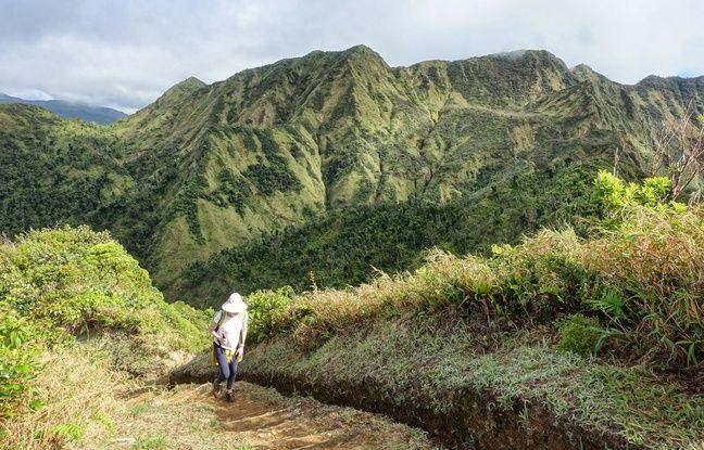 De nombreux sentiers escarpés parcourent le parc national Morne Trois Pitons.