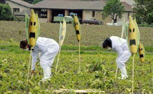 Des activistes de Greenpeace arrachent des plants de maïs transgénique à Roquettes, le 2 mai 2014