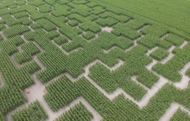 Vue aérienne du labyrinthe végétal