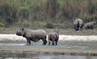 Dans un pays où les plaies ouvertes de la guerre civile et les querelles politiques freinent depuis des années le développement et la prospérité, la croissance de la population de rhinocéros en danger est l'un des rares succès du Népal