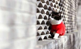 Un chat mignon. Illustration.