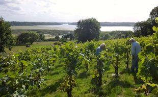 Le vignoble du Mont Garo, à Saint-Suliac, produit du vin depuis plus de quinze ans.