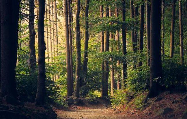 Forêt occidentale