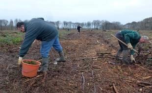 Les agents de l'Office national des forêts procèdent à des reboisements à Montauban-de-Bretagne.